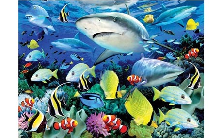 Paint by Numbers Reef Sharks - Cregal Art   Art and Craft Supplies